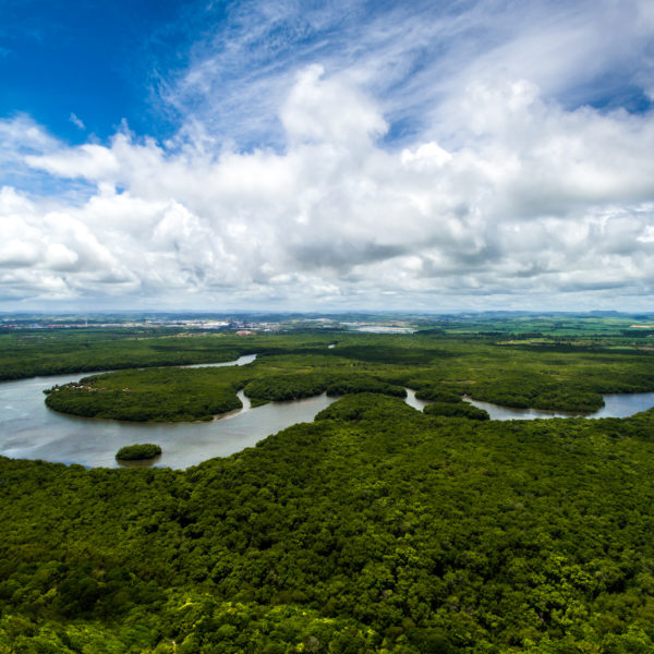 Aerial view of Amazonian rain forest